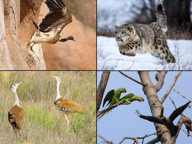 Pakistan's wildlife: Going, going, gone!