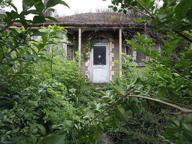 The abandoned garden