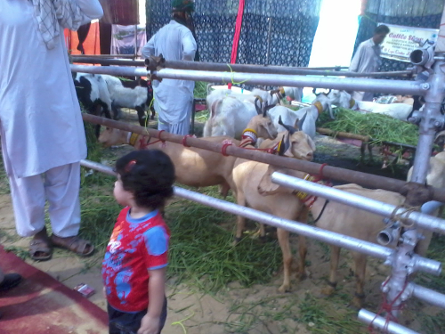 Sindh Horse & Cattle Show